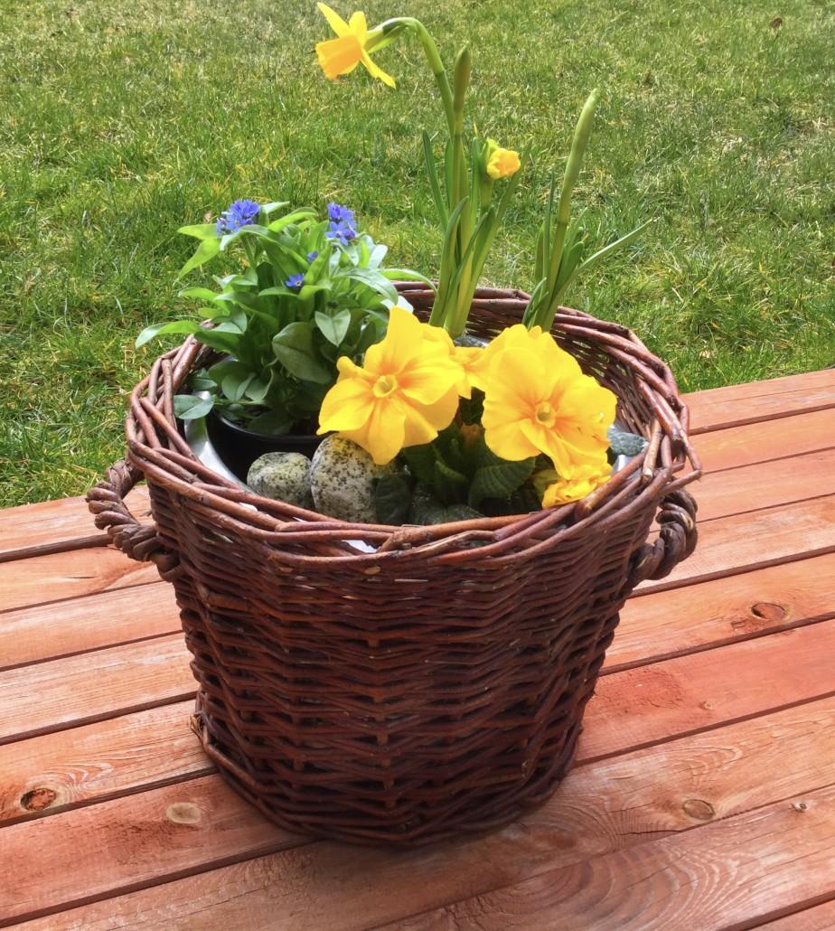 Frühlingsblumen/tagaustagein