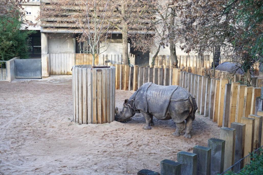 Nashorn in der Wilhelma
