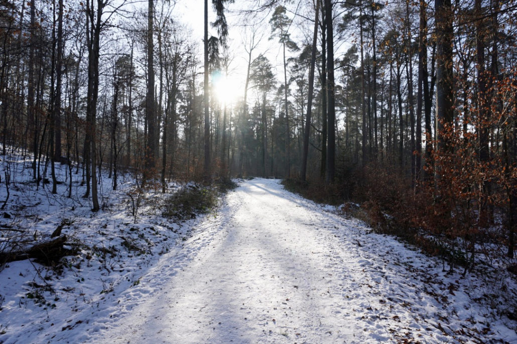 Wald im Winter Winterwald