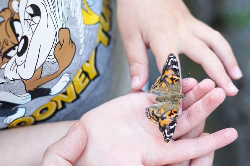 Schmetterlinge Schmetterlingsgarten