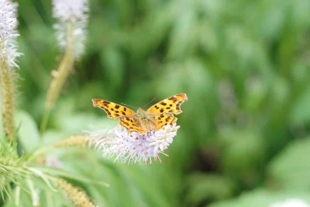 Vom Tod, dem Schmetterling und Unterstützung für Mamamulle