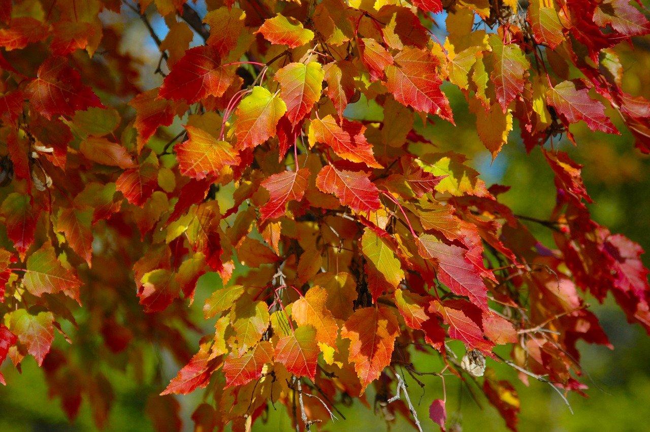 Herbstblätter sammeln, Herbstaktivitäten mit Kindern