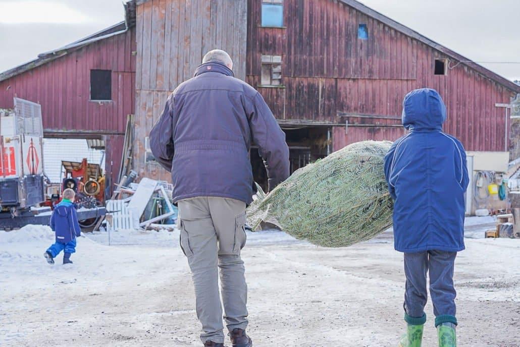 Weihnachtsbaum aussuchen