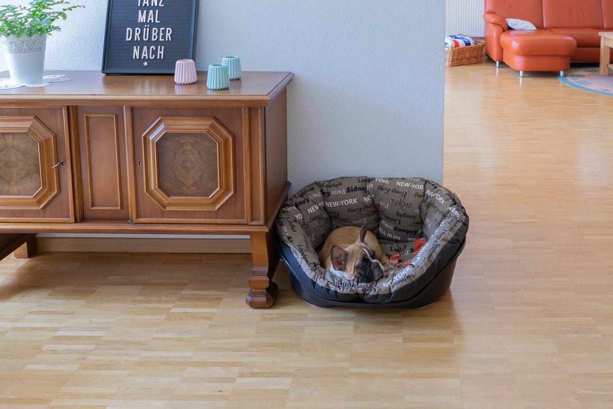 Max - französische Bulldogge im Körbchen