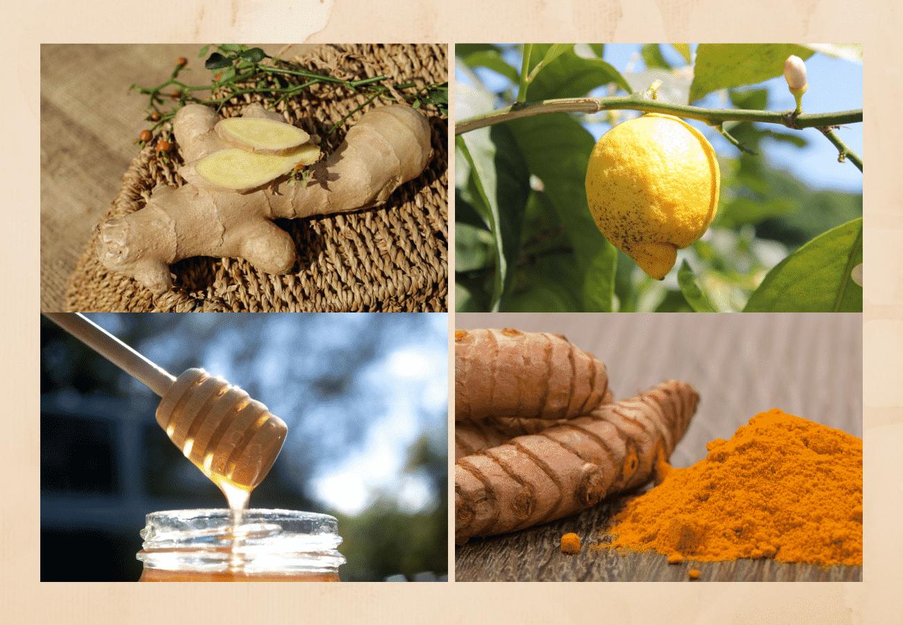 ingwer zitrone honig kurkuma