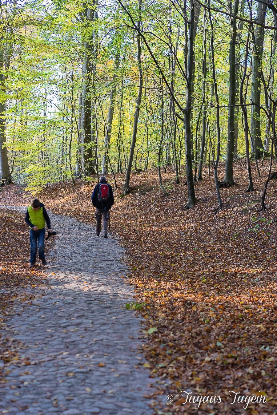 Herbstwald bei Schloss Granitz