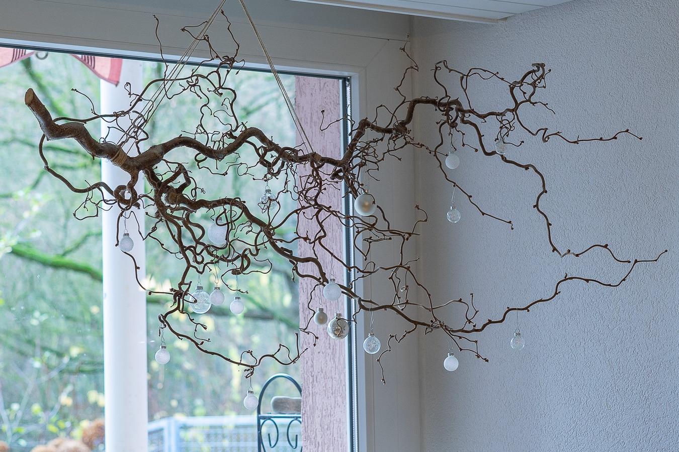 Korkenzieherweide mit weihnachtlicher Dekoration