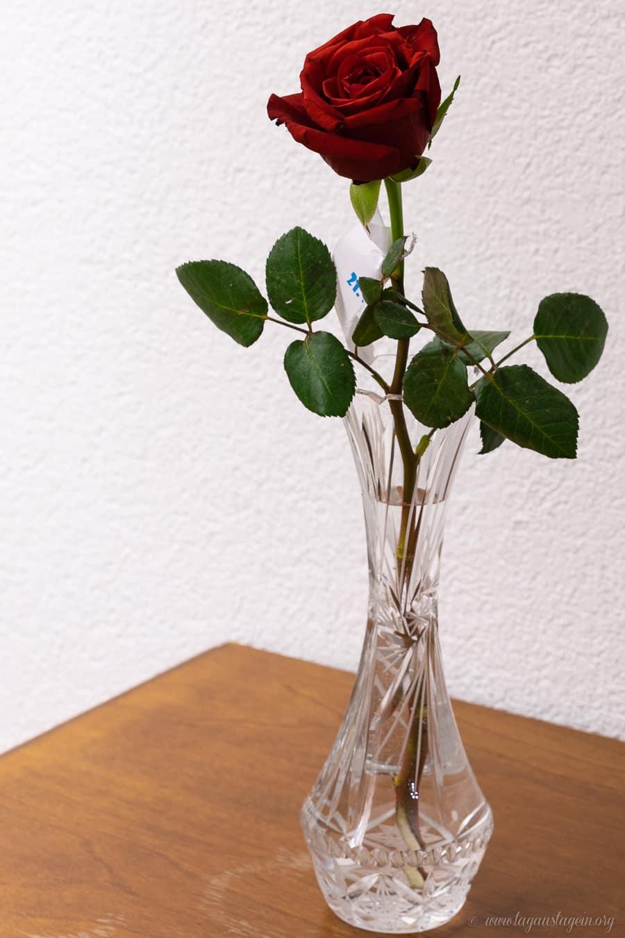 Rose zum Valentinstag