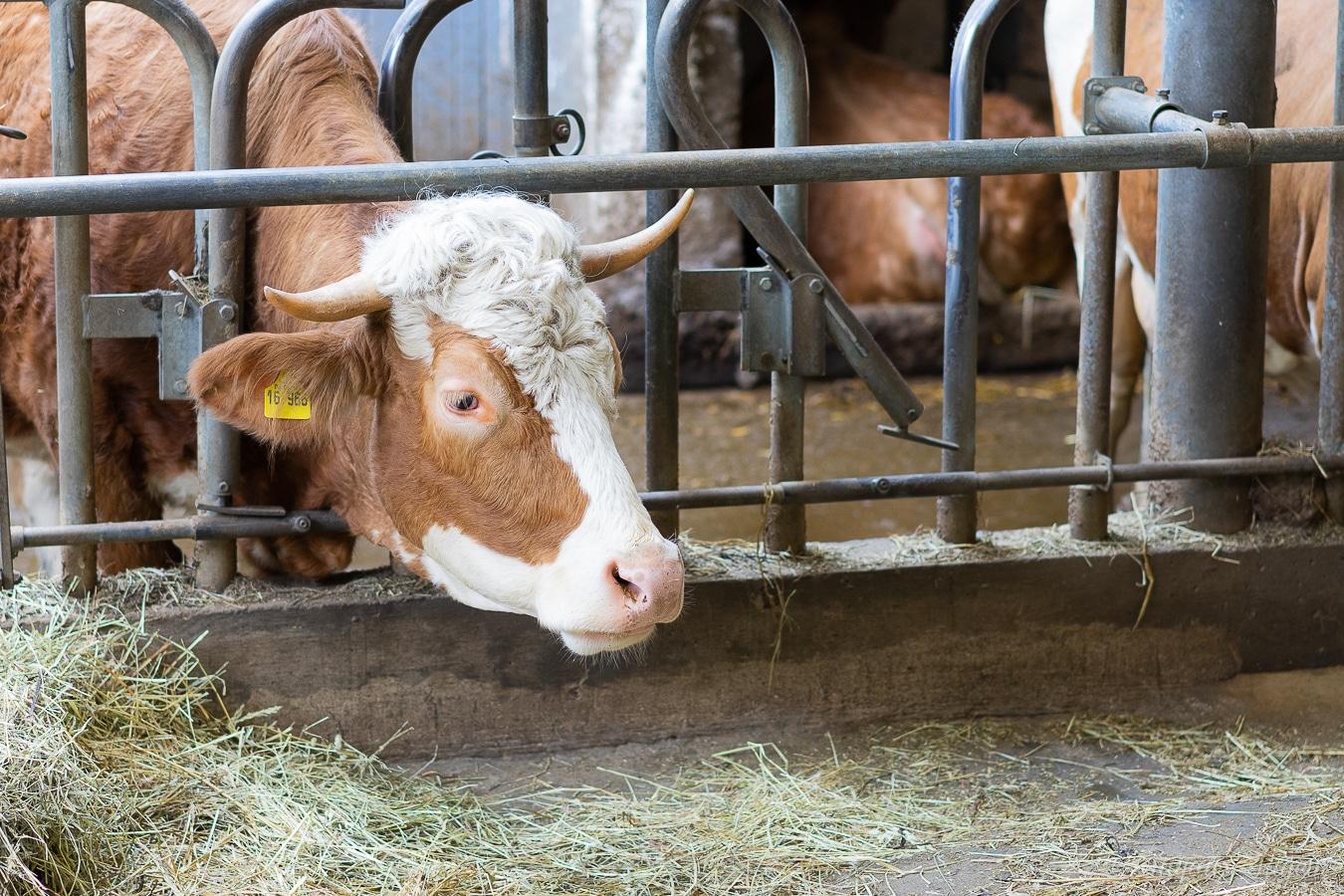 Lecker-Entdecker-Tag von Schwarzwaldmilch gewinnen