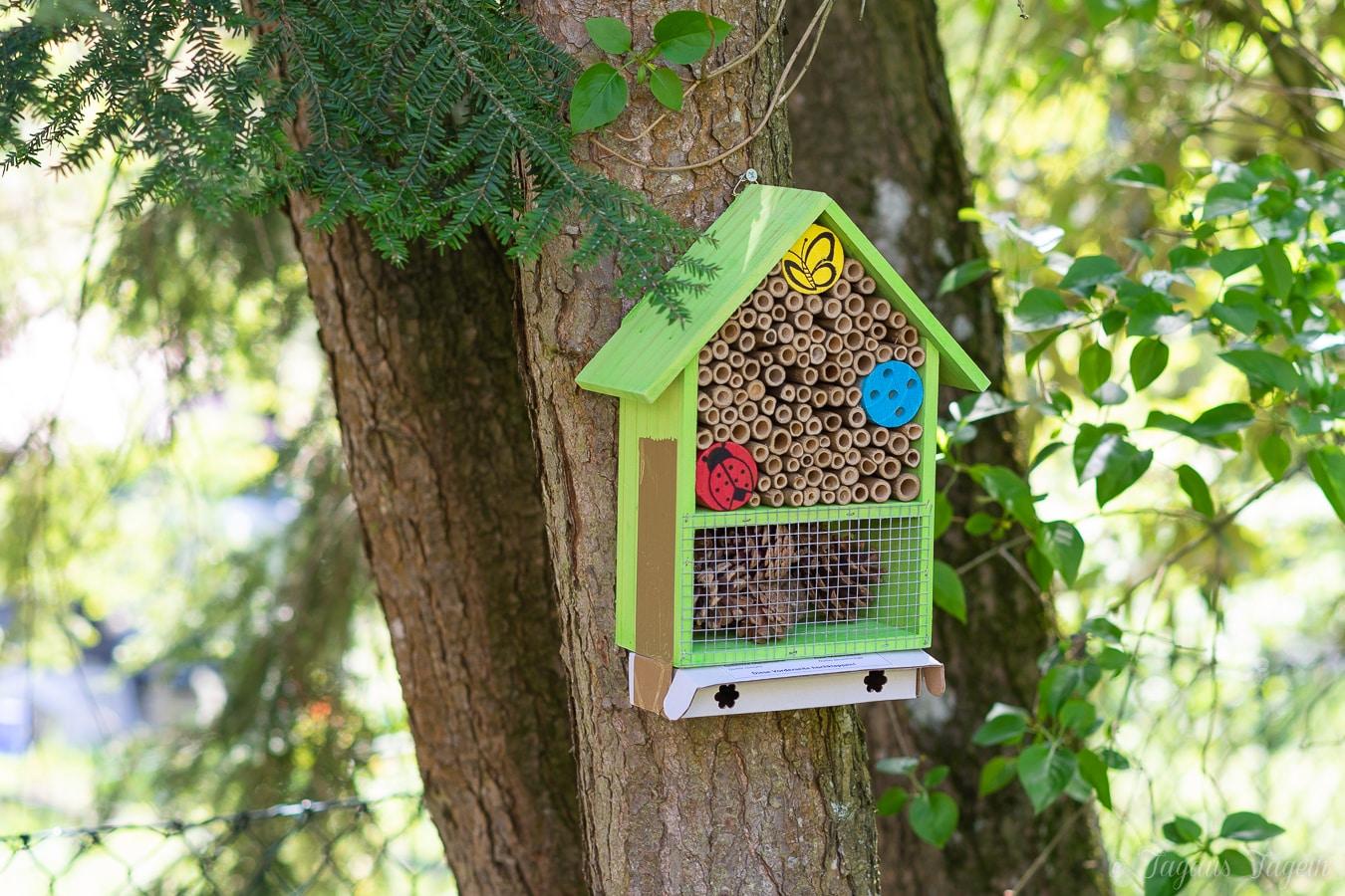 Bienen ansiedeln