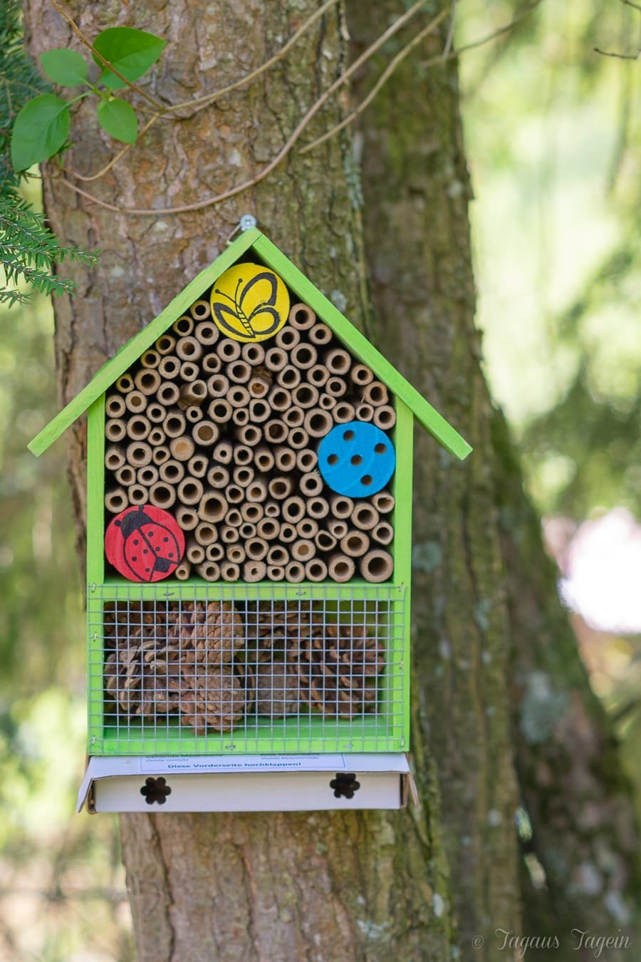 Wildbienen im Garten ansiedeln