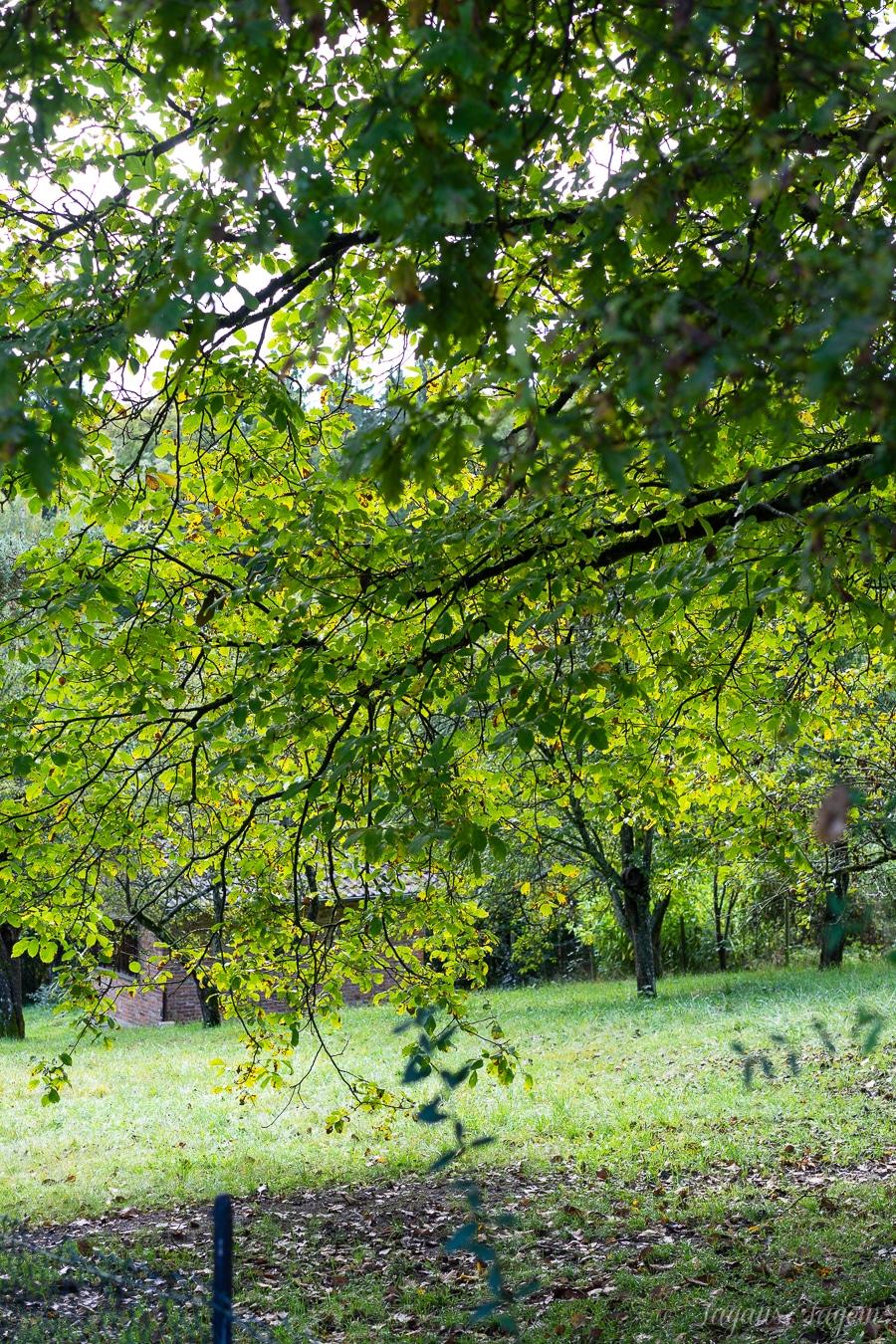 Herbstlieblinge