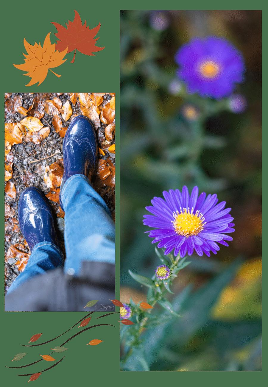 Herbstlieblinge Gummistiefel für den Herbst