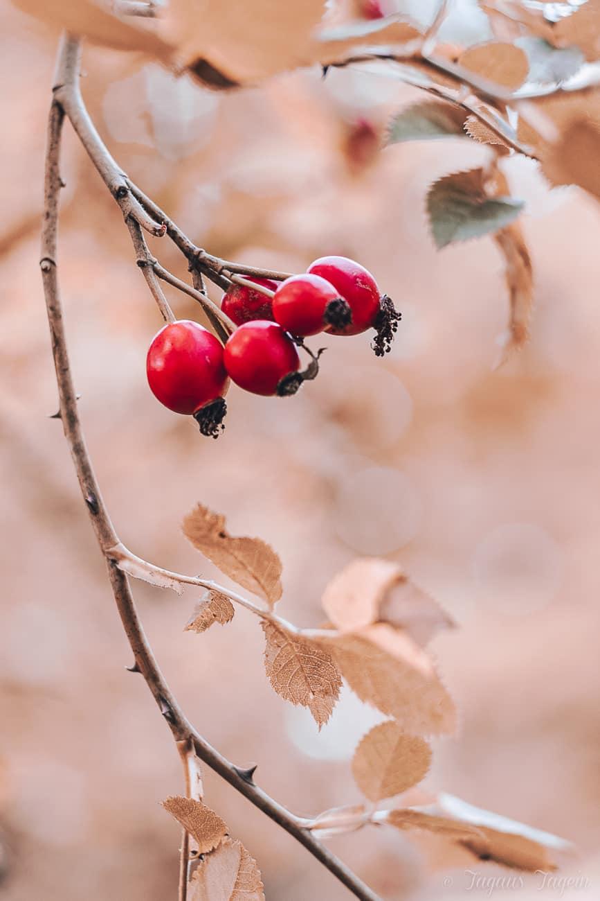 Herbstlieblinge – In einen schönen Herbst starten, mit allem, was uns guttut