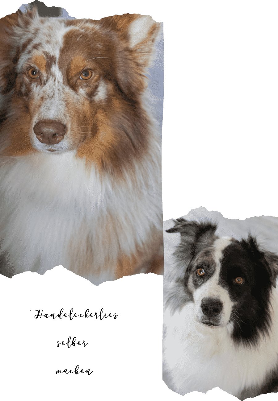 Hundeleckerlies selber  machen