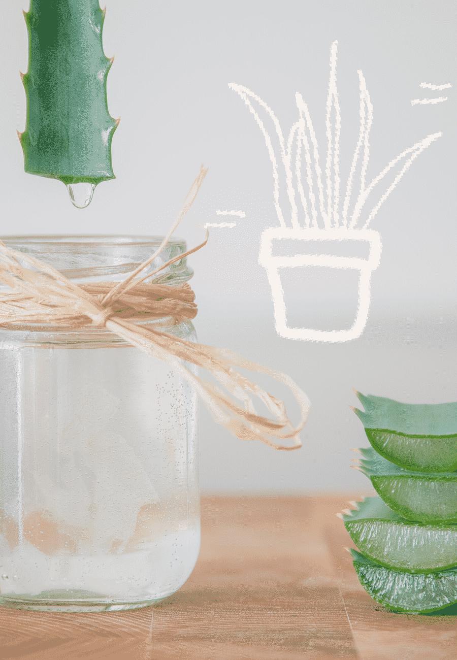 Meine Erfahrungen mit Aloe Vera – DAS Wundermittel gegen Haarausfall und trockene Kopfhaut