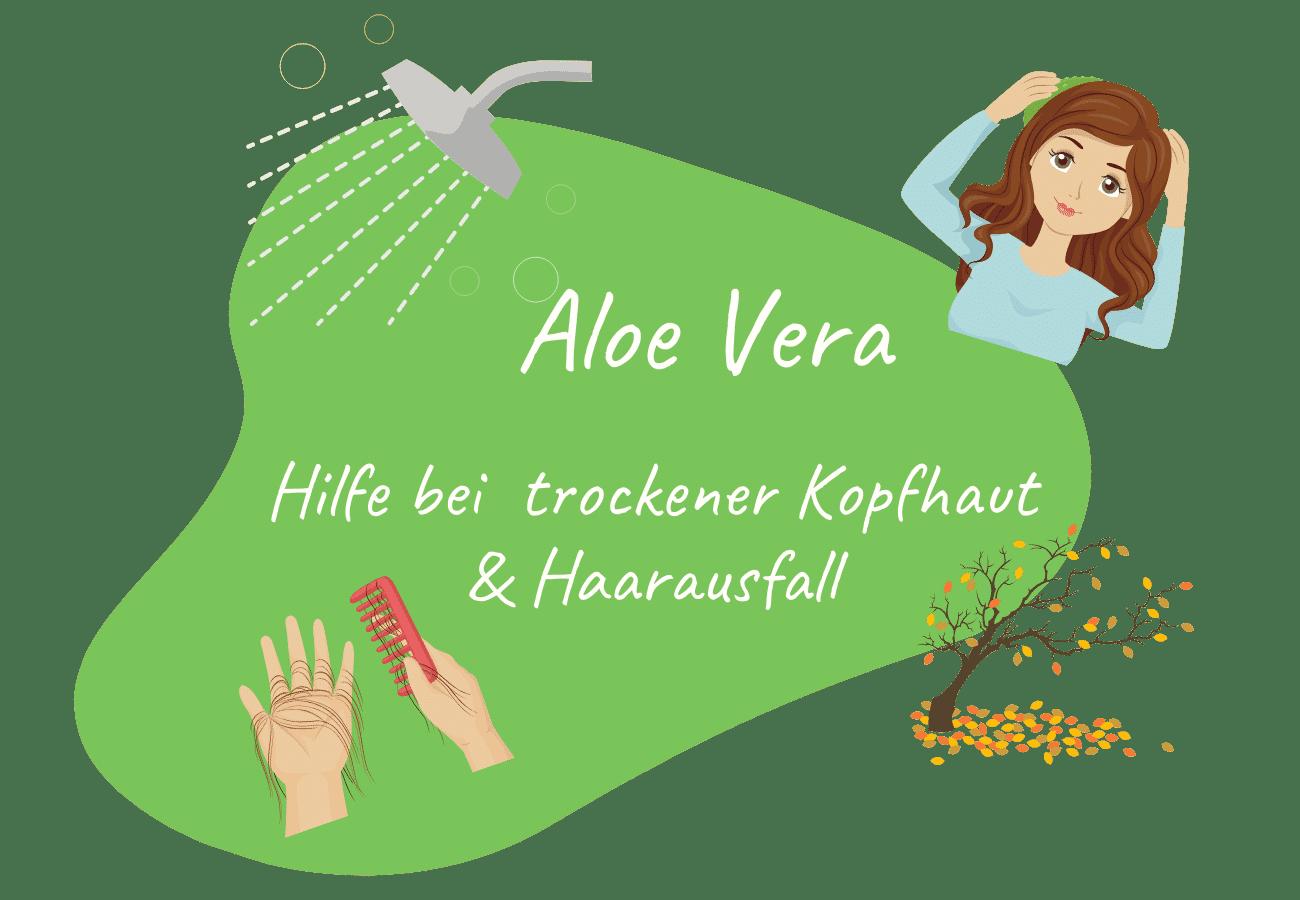 Aloe Vera - Hilfe bei trockener Kopfhaut
