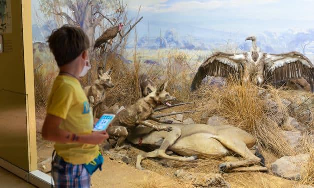 Familienausflug ins Naturkundemuseum Stuttgart – Auf den Spuren von Nature World