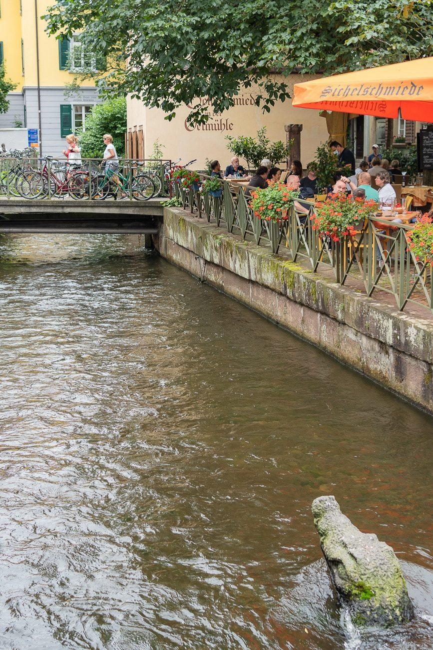 Krokodil im Gewerbebach Freiburg